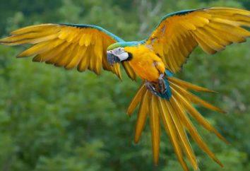 5 największych i najbardziej popularnych papugi świata