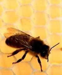 Herbst Fütterung von Bienen: schnell, effizient, pünktlich