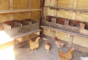 Comment faire des nids pour les poules pondeuses avec leurs mains