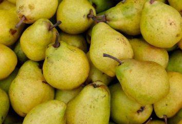 varietà di pere per la Siberia: Perun, Svarog, Lel, Severyanka. Descrizione delle varietà, particolarmente in crescita
