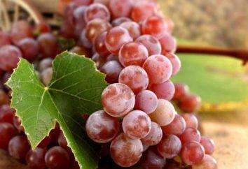 Sont les raisins deviendront une nouvelle arme dans la lutte contre la carie dentaire?