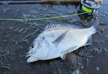 Invierno flotador caña de pescar: características, tipos, características y opiniones