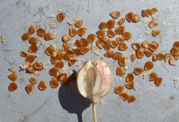 Stratificazione di semi – a … Semi: la preparazione per la semina