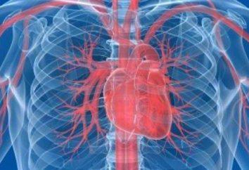 Como é que o coração do homem, quais são as suas funções?
