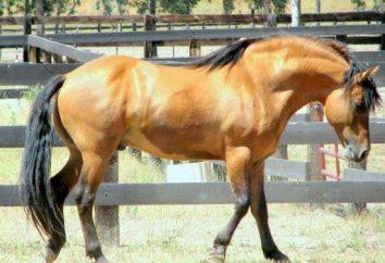 Race Kiger Mustang: l'histoire, la nature, la valeur de