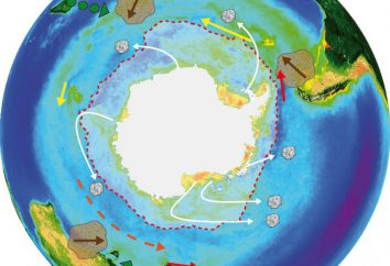 ¿Cuál es el ciclo de la materia? Circulación de sustancias en el ecosistema. Esquema del ciclo de la materia en la naturaleza