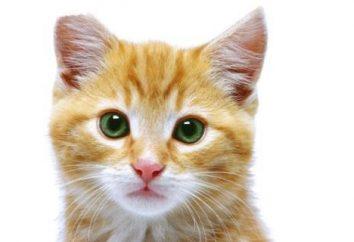 A quel âge peut-être les chats stérilisés et que pour le faire?