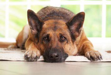 Perro – el mejor amigo del hombre. devoción perro