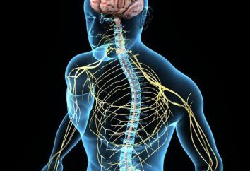 Przewodzenia oraz odruch funkcji rdzenia kręgowego