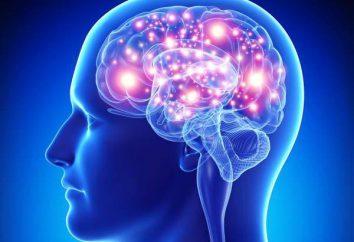 Mózg. pnia: struktura i funkcja choroby