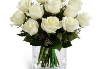 Um buquê de rosas brancas – o símbolo da pureza