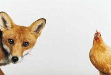 Poulets foxy-chic: description de la race, photo