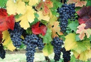 Déterminer la synchronisation: quand les raisins taillés à l'automne?
