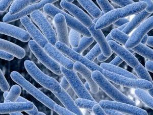 Infektionskrankheit, die heilt? Bei Anschluss an einen Arzt, Infektionskrankheiten zu sehen?