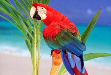 Jak nazwać chłopca papuga-papugi lub dziewczynę