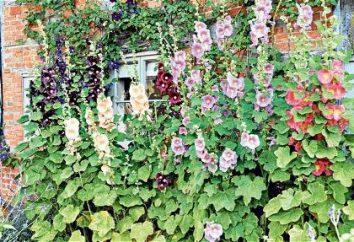 Jak zrobić kwiat łóżko w kraju własnymi rękami: porady i wskazówki