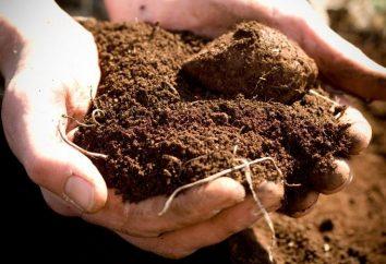 analiza gleby – kompleksowa ocena gleby
