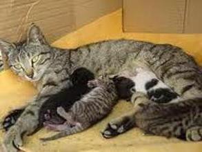Lo que hay que alimentar a un gato de enfermería?