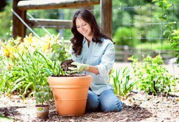 Anthurium e Spatifillo: descrizione, la cura a casa. E 'possibile mettere insieme Spathiphyllum e Anthurium
