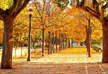 Le cose da fare in autunno, in modo da non perdere