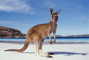 Australia: una forma de gobierno, descripción, historia y datos interesantes