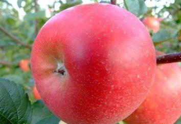"""Apple tree """"Ligol"""": una descrizione della varietà, foto"""