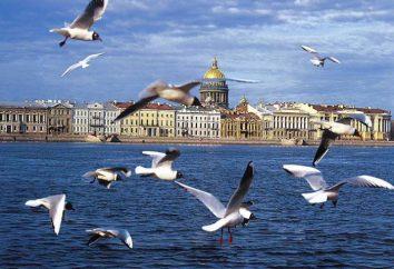 Atrakcje w Petersburgu. Rosyjski muzeum w Petersburgu. Miejsca pamięci Petersburga