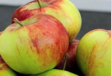 variedades listrados maçã Rossosh: descrição da variedade, especialmente o cultivo, foto