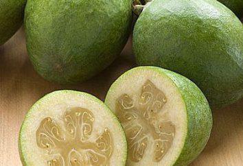 Propiedades útiles de mirto. Cómo comer fruta en la comida?