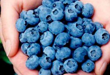 Bleuets Blyukrop: description de la variété, la culture et l'entretien, photo