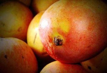 Comment choisir une mangue pour tirer le meilleur parti et le goût?