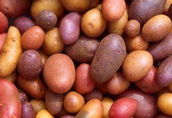 Varietà patate olandesi: caratteristiche, foto e descrizione