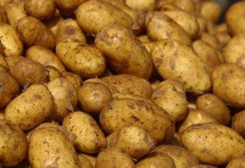 Choroby ziemniaków i ich kontrolą. Ziemniaki szkodniki i choroby