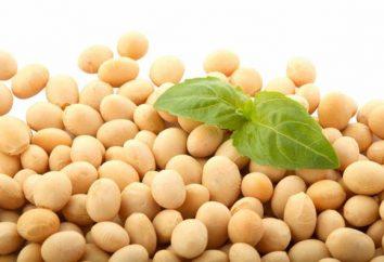 Produit de soja: les avantages et les inconvénients des céréales de haricots