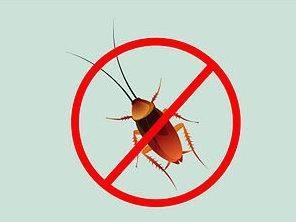 Najbardziej skutecznym środkiem karaluchy w mieszkaniu