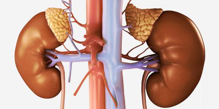 Erkrankungen der Nebennieren bei Frauen: Symptome und Behandlung