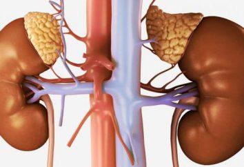 Choroby nadnerczy u kobiet: Objawy i leczenie
