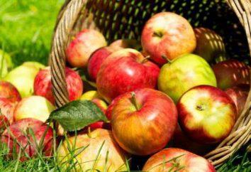 Napój wykonany z jabłkami: recepty