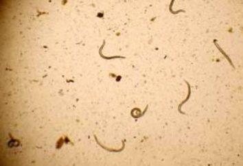 Parassitologia medica: Definizione, malattie, parassiti classificazione