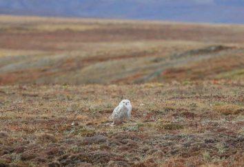 El suelo de la tundra: la descripción y caracterización de