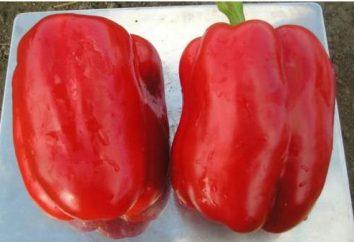 Pepper Atlas: recensioni, descrizioni grado foto