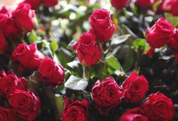 Schöne Zitate über Blumen