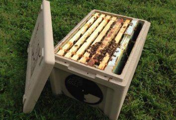 Jądro: co to jest? Co musi pszczelarzy Nucleus?