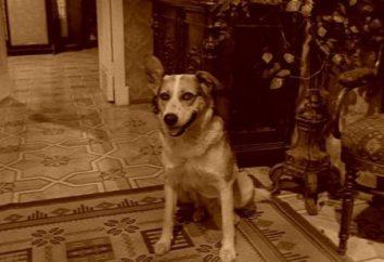 """Sharikova imagen en la novela """"Corazón de perro"""" por Mikhail Bulgakov"""
