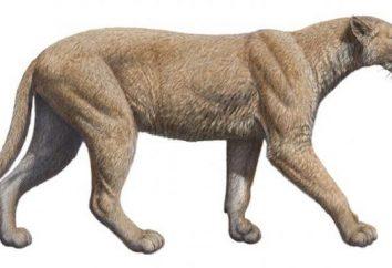 Où est passé le chat sur la planète?