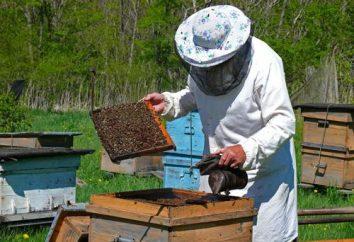 Kandy para as abelhas: a receita. Top vestir de abelhas no inverno: as lições da apicultura