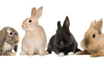 Wie für dekorative Kaninchen kümmern? Dekorative Kaninchen: Pflege und Wartung