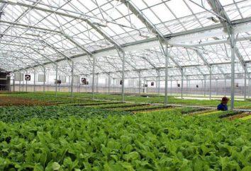 serre in azienda: i tipi, prezzi. coltivazioni in serra con le proprie mani