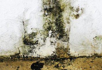 Les moyens de la moisissure sur les murs: Conseils