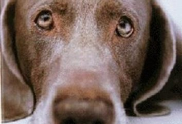 """Fabuła """"Snapper"""" Andreev. Fabuła wprowadza bezpańskich psów historię"""